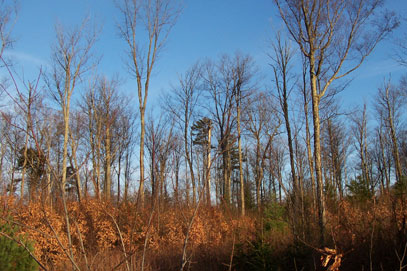 Lyme Adirondack Timberland Leasing